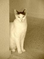 Oreo, Myrna's cat