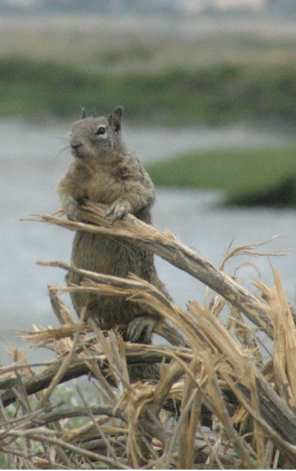 Lorna's squirrel, up close & personal. Copyright by Sanny Leviste, 2007. All rights reserved.